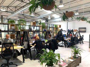 L'importanza di utilizzare le piante in ufficio