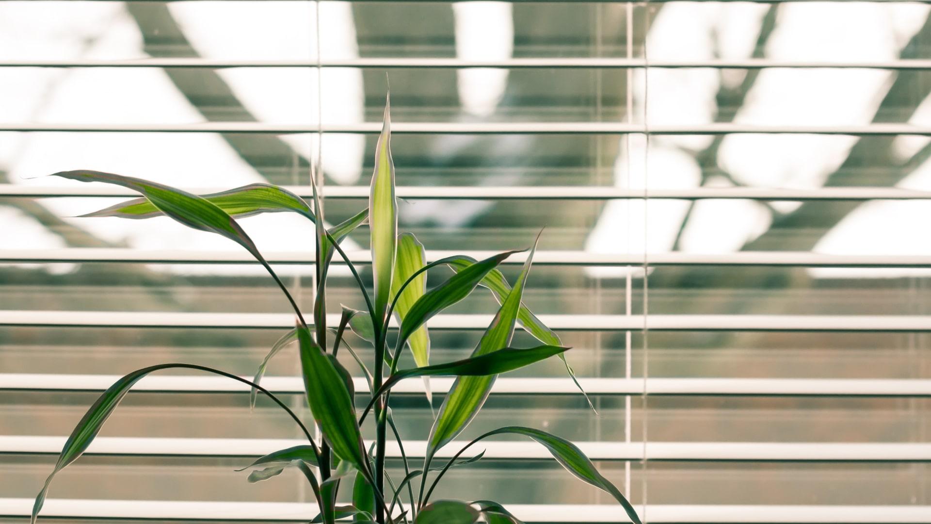 green office sistema ufficio
